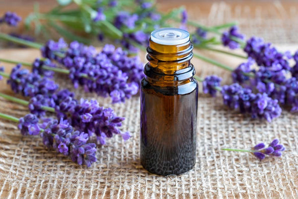 Benefits and Uses Lavender Essential Oil