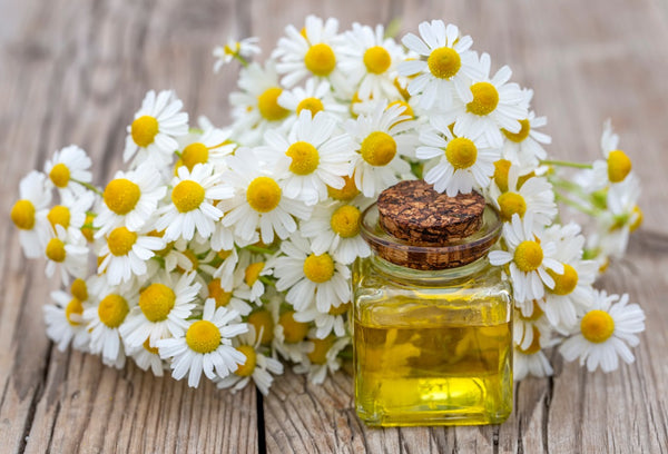 Amazing Benefits Of Chamomile Oil For Hair
