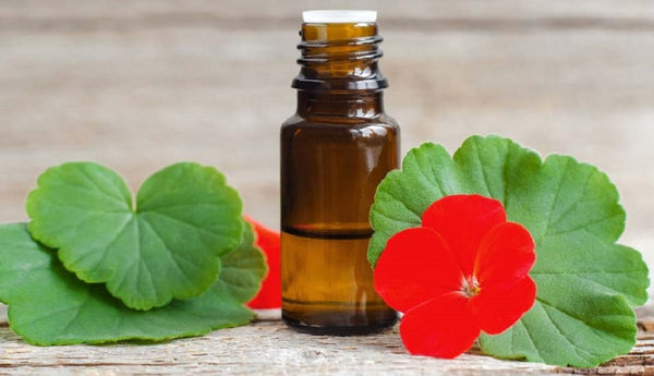 9 Benefits of Geranium Oil