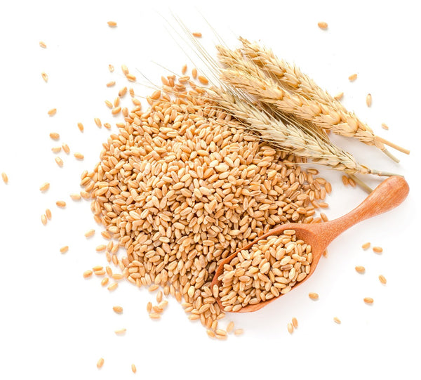 Hydrolyzed Wheat Protein For Strengthening Your Hair