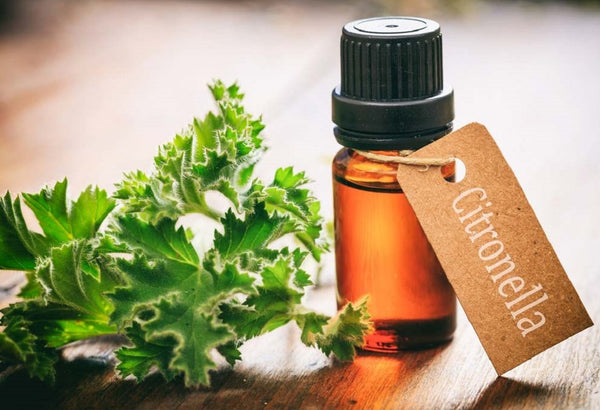 9 Benefits of Citronella Oil