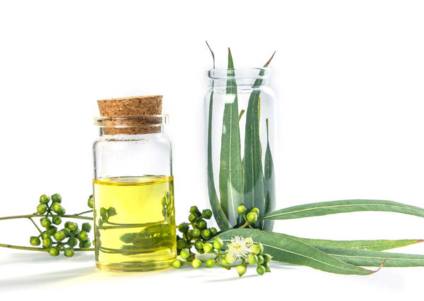 Best-Eucalyptus-oil-for-hair