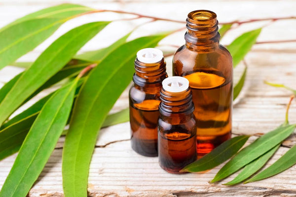 Eucalyptus-Essential-Oil-for-headache