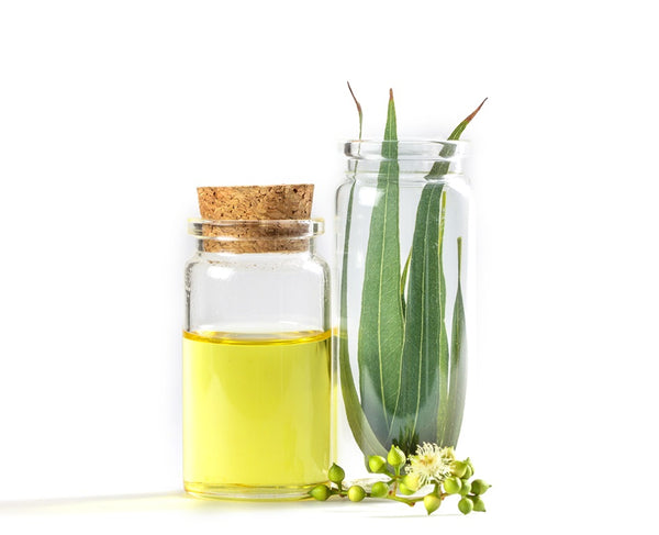 Eucalyptus Essential Oil  for cold and congestion