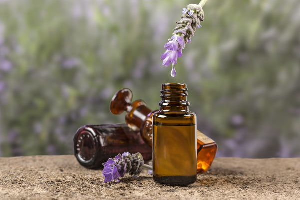 Lavender Essential Oil Cold and Cough