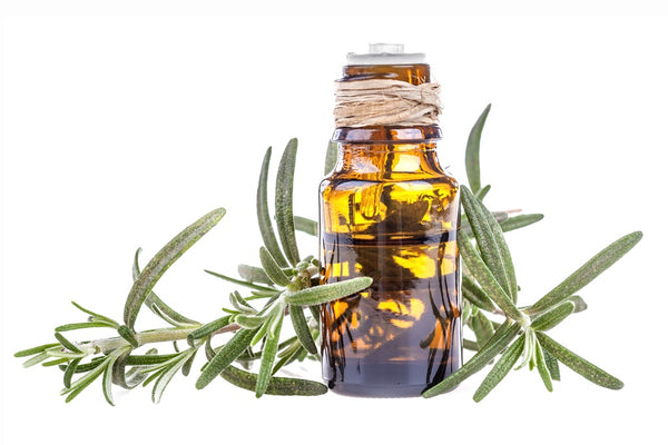 Rosemary Essential Oil for Clod and Cough