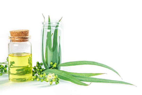 eucalyptus-oil-for-cold-and-cough_613579442