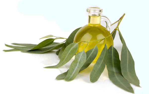 eucalyptus oil for acne