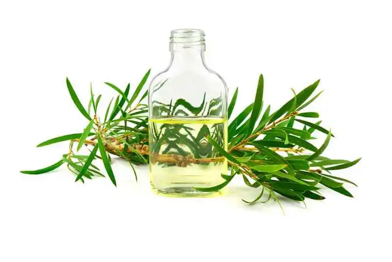 benefits-of-tea-tree-essential-oil-for-acne-scars-pigmentation