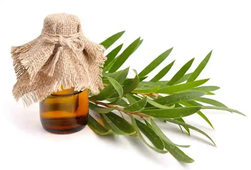 tea-tree-essential-oil-benefits