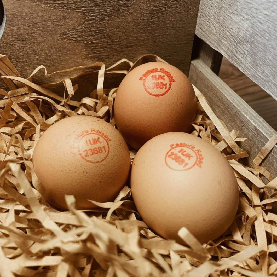 Pullet Eggs - Primal Grazing - Pasture Raised - GMO Free