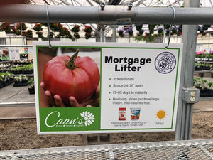 "4.5"" Tomato- Mortgage Lifter"