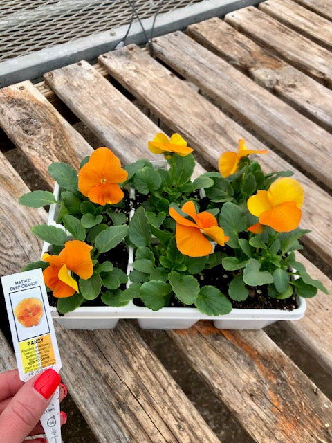 Pansy 6-Pack - Matrix Deep Orange