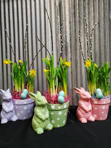 Daffodil Bunny Display
