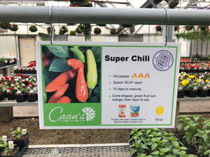 "3.5"" Pepper- Super Chili"