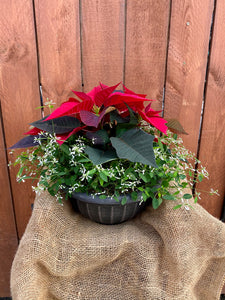 Winter Frost Poinsettia Bowl