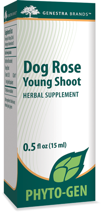 Dog Rose Young Shoot