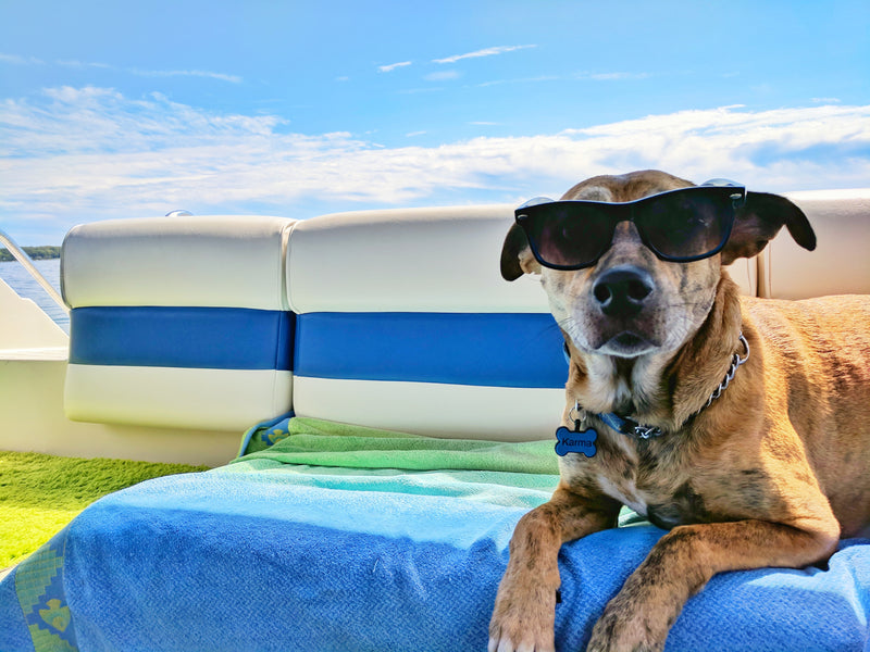 Hot Weather Dogs: Tips for Keeping Your Canine Cool by The dog people and Dogwinter