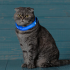 Image of Light Up Dog Collar - Flashing Dog Collar