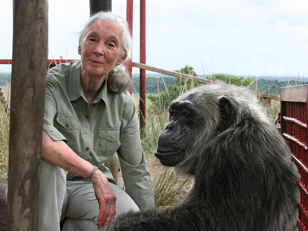 Dr. Jane Goodall founder of the Jane Goodall Institute
