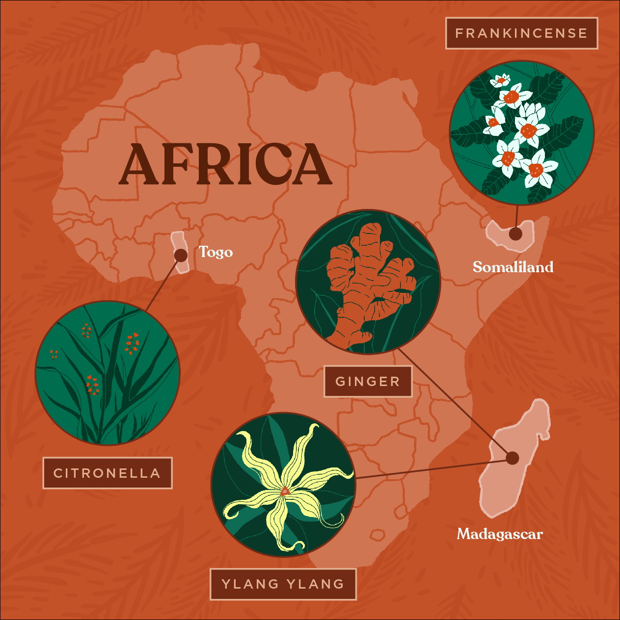 Essential oils sustainably-sourced from countries in Africa