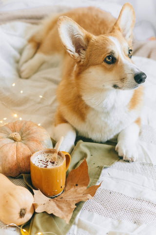 cute dog in bed with puppuccino coffee