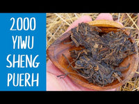 Descent into Truth ᛇ 2000 Yiwu Sheng Puerh