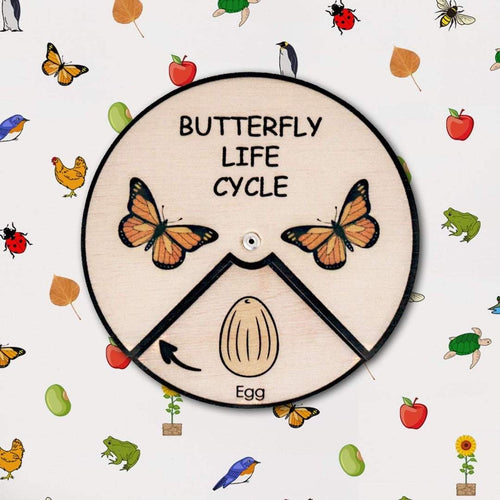 Learning Wheels - Butterfly Lifecycle - mytinyfingers baby products