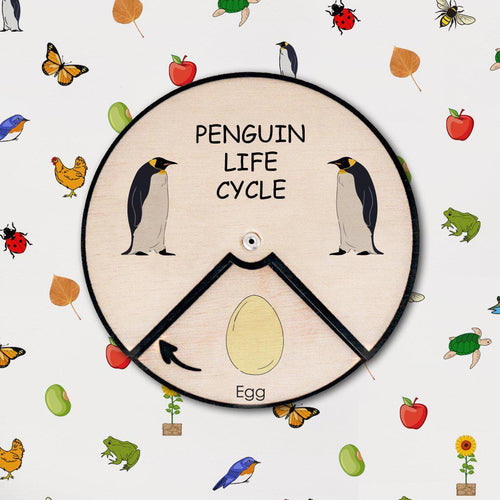 Learning Wheels - Penguin Lifecycle - mytinyfingers baby products