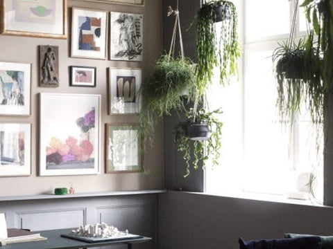 Plants for wellbeing in the home & home office