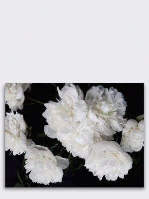 Peonies Art Print - Cloudberry Living