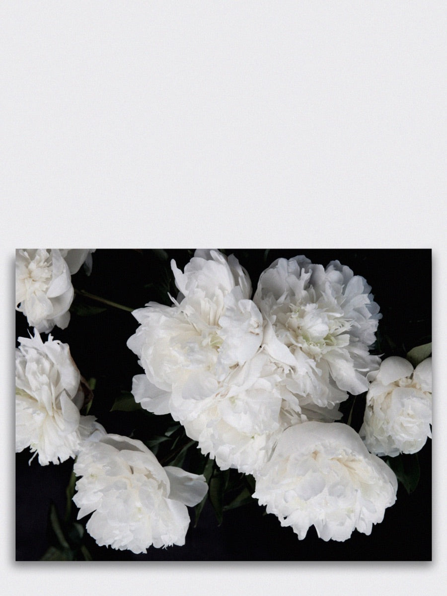 Peonies Art Print 60 x 80 cm - Cloudberry Living