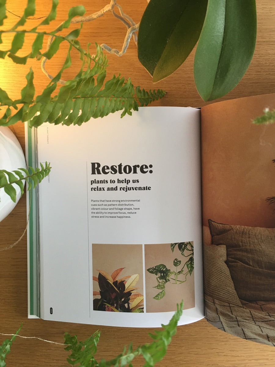 Plant Therapy By Katie Cooper Improve Your Mental & Emotional Wellbeing - Cloudberry Living