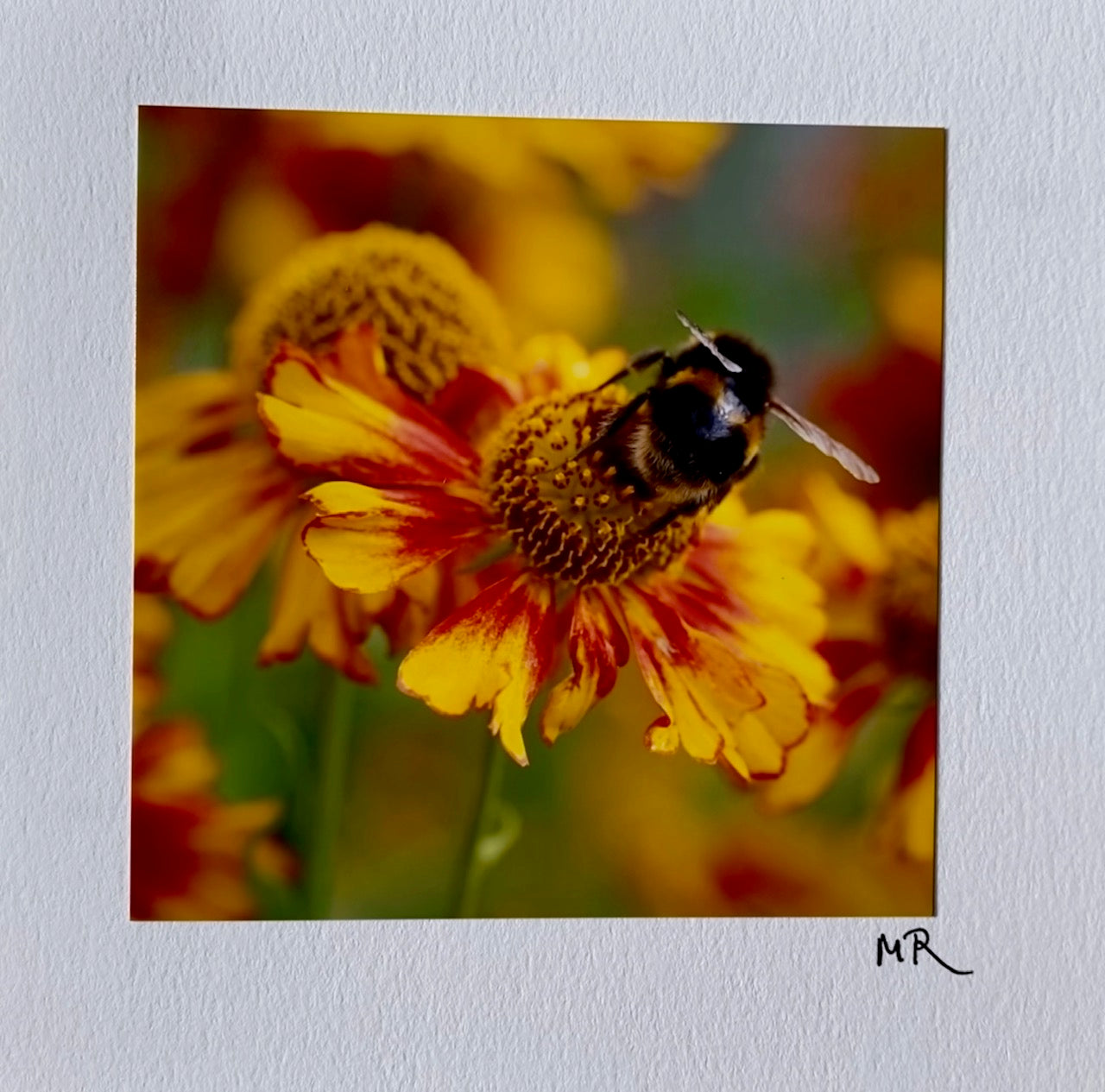 Blank Gift Card -  Busy Bumble Bee