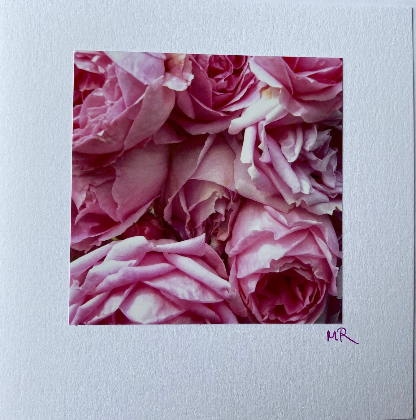Blank Gift Card-Pretty pink garden Rose