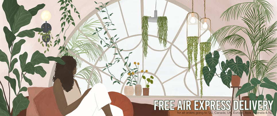 LED Edison Filament Bulbs Collection
