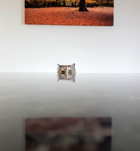 bored cat at empty table