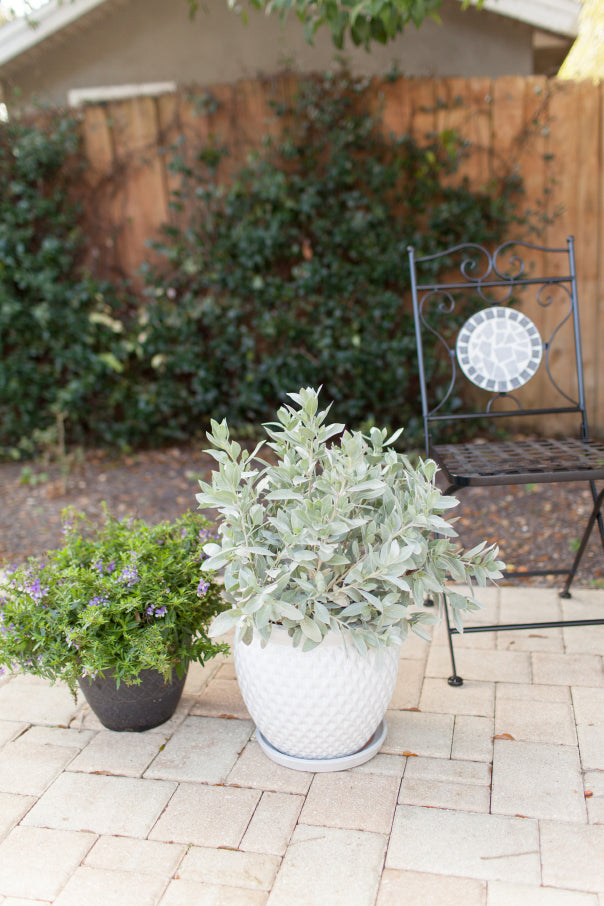 A plant perfect for a porch refresh