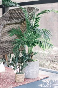 Plants bring so much life to this patio space