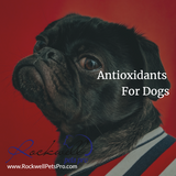 Antioxidants For Dogs