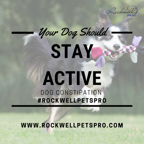 Dog Is Constipated - Stay Active - Rockwell Pets Pro