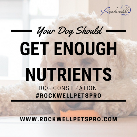 Dog Is Constipated - Get Nutrients - Rockwell Pets Pro