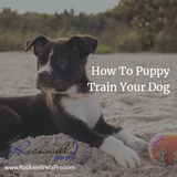 how to teach a dog to sit pretty