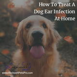 How To Treat A Dog Ear Infection At Home