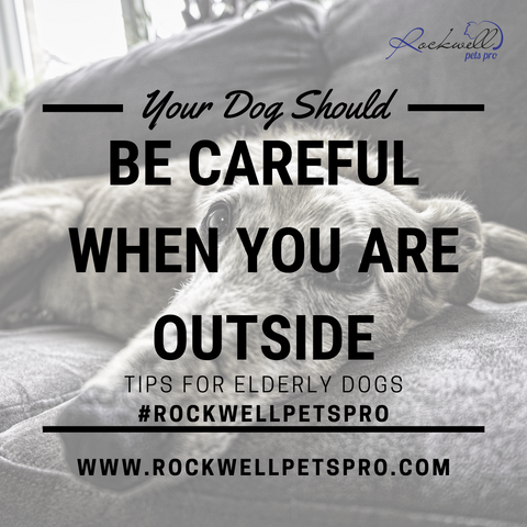 Old Dogs That Are No Longer Listening www.rockwellpetspro.com