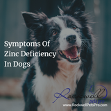 Symptoms of zinc deficiency in dogs