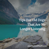 Tips For Old Dogs That Are No Longer Listening
