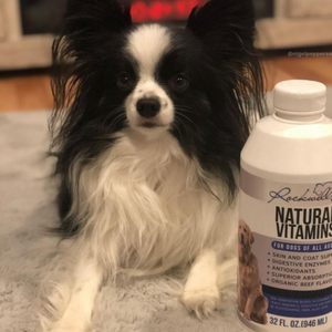 Natural Dog Vitamins
