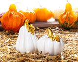 Salt & Pepper </br>Pumpkin