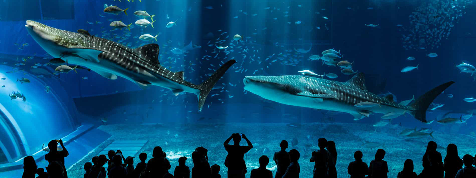 10 plus beaux aquariums du monde, Hengqin en Chine